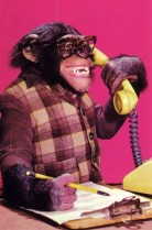 I lost my customer service job to chimp outsourcing. Must I lose my dream of becoming an author too?